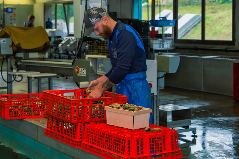 Expédition Chronofesh des huîtres de Cancale
